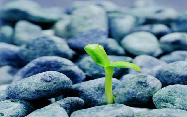 激励自己坚强的图片