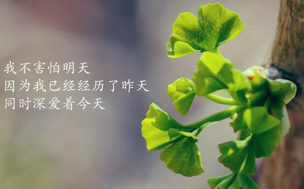 我不害怕明天,因为我已经经历的昨天