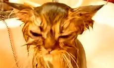爆笑宠物的悲苦沐浴时间